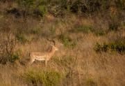 South Africa 2018 web-242
