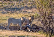 South Africa 2018 web-249