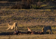 South Africa 2018 web-252