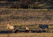 South Africa 2018 web-253
