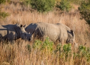 South Africa 2018 web-280
