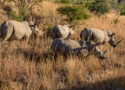 South Africa 2018 web-283