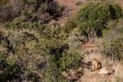 South Africa 2018 web-294