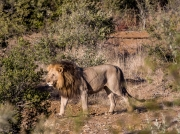 South Africa 2018 web-297