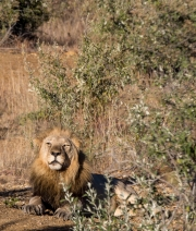 South Africa 2018 web-298