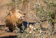 South Africa 2018 web-299