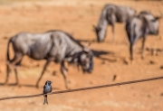 South Africa 2018 web-314