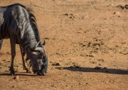 South Africa 2018 web-316