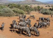 South Africa 2018 web-323
