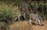 South Africa 2018 web-328