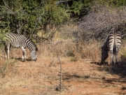 South Africa 2018 web-329