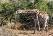 South Africa 2018 web-336