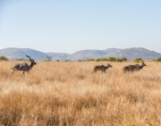 South Africa 2018 web-341
