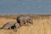 South Africa 2018 web-346