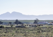South Africa 2018 web-391